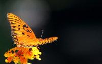 https://pixabay.com/de/leidenschaft-schmetterling-58439/; Quelle: pixabay.com - JamesDeMers